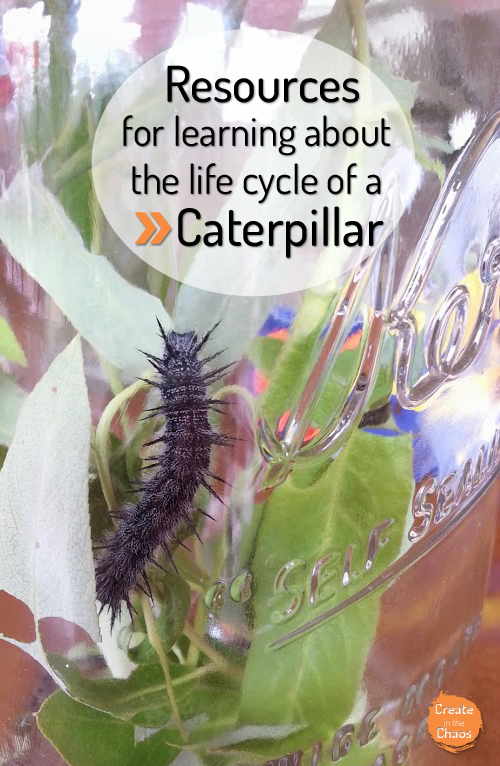 Very Hungry Caterpillar activities + learning with a live caterpillar www.createinthechaos.com